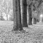Gedanken zum Herbst