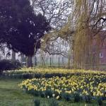 Ein überschwänglicher Frühlingsgruß der Natur