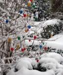 Moderne Jahreszeiten oder Der Schneeeierbaum