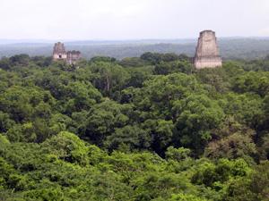 . Ruinengipfel der Pyramidenstadt Tikal