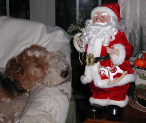 """Ein """"Hundelben"""" führen sie nicht - der Weihnachtsmann und seine """"Kollegen"""" - wie hier Santa Claus!"""