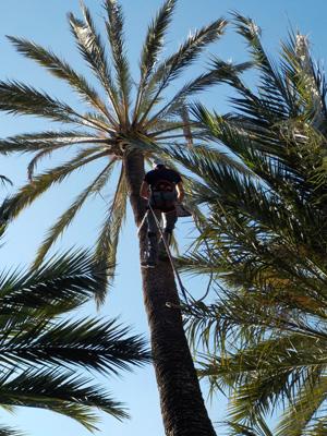 Manolo auf der Palme